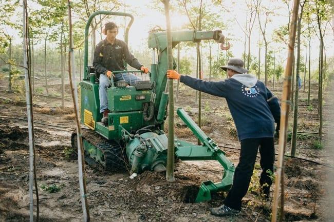 מכשיר לעקירת עצים