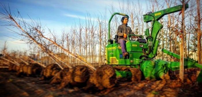 עקירת עצים בטרקטור ייעוד