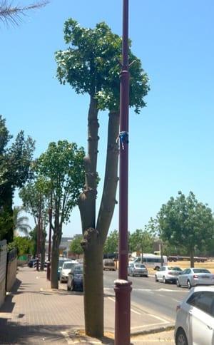 עץ עם נוף מגורדם