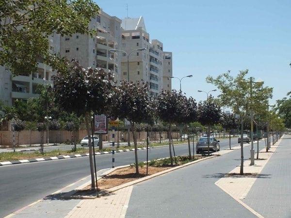 שדרת עצים ברחוב