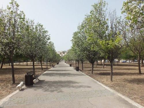 עצי חורש פורחים